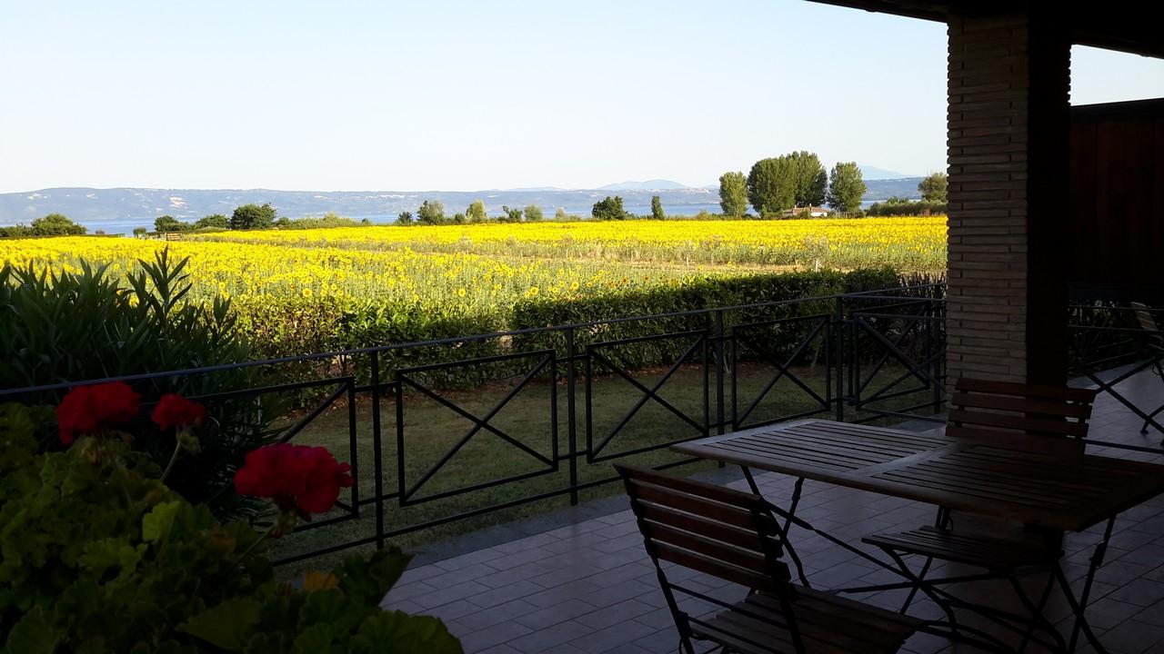 Agriturismo Bolsena - Arlena - girasoli